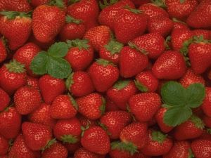 Lots of strawberries
