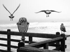 Seagulls at a viewpoint