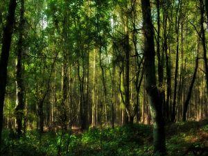 Forest full of trees