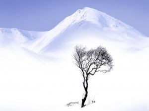 A tree in the snowy mountain