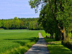Crossing a green field