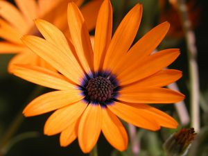 Orange and purple flower