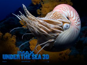 Under the sea 3D (IMAX)