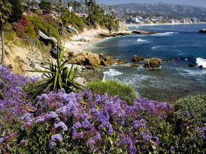 Purple flowers near the sea