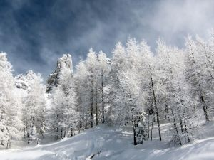 Trees dressed in snow