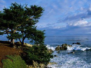Trees near the sea