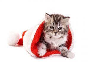 Kitten in a Santa hat