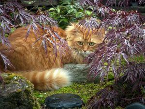 Cat with a piercing gaze