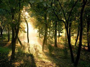 Sunlight illuminating the park