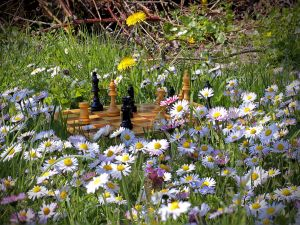 Chess board among flowers