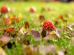 Small mushroom in autumn