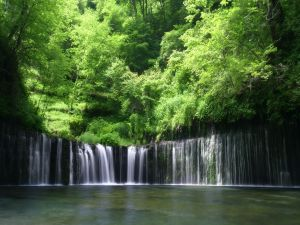 Waterfalls between green trees