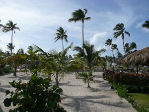 Vegetation on a beach in Punta Cana, Dominican Republic