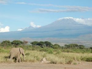 An elephant, with Kilimanjaro in the background
