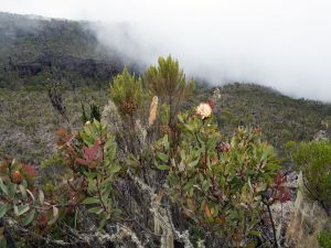 Vegetation in the Kilimanjaro
