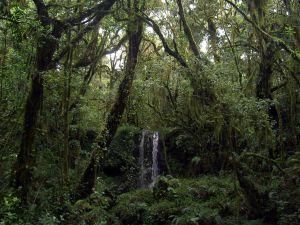 Waterfall in the jungle near Mount Kilimanjaro