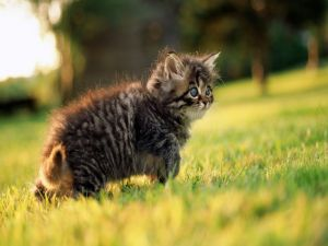 Little cat in the green grass