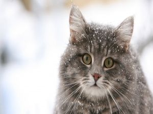 A cat with snow on the body