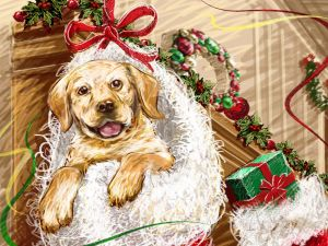 Dog in a Christmas stocking