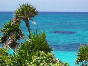 Plants near the blue sea