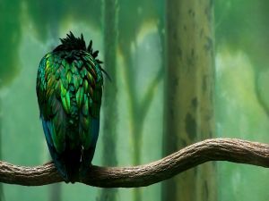Green feathers of a bird