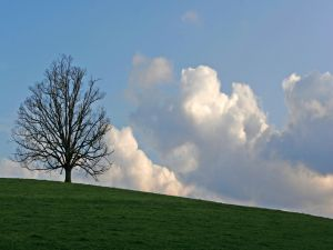 A leafless tree in green grass