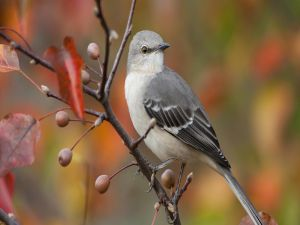 Little gray bird