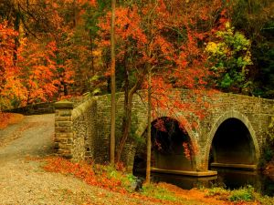 A road and a bridge with fallen leaves