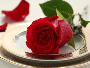 Rose over a plate