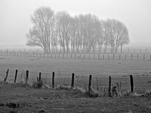 Photo of trees in black and white