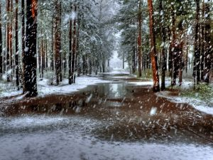 Snow falling in the forest