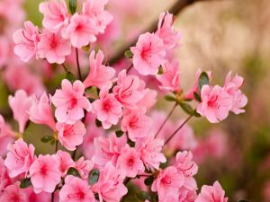 Flowers with pink petals