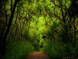 Walk along the path of green forest