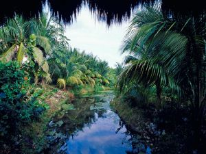 Small river with palm trees
