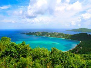 Blue sea and vegetation