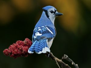Bird with blue feathers on a branch
