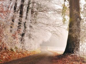 Frozen forest and road