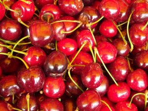 Cherries freshly picked
