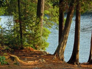 Trees near water