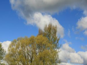 Clouds over the green trees