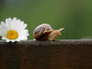 Snail walking over a trunk