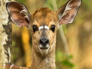 Deer very attentive