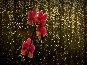 Orchids and lights