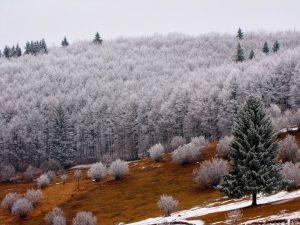 Forest in winter (Romania)