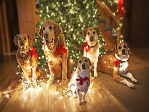 Dogs with lights next to Christmas tree