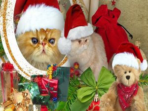 Kittens with Santa Claus hats
