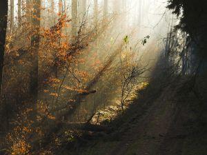 Sunlight illuminates the forest