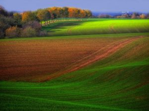 Fields planted
