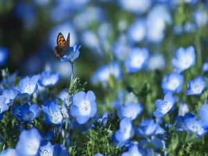 Butterfly on a field of blue flowers