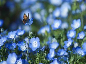 Butterfly on a field of blue flowers